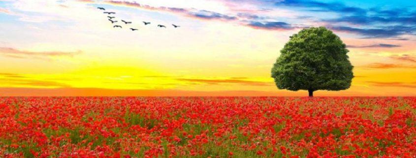 498527__red-flower-field_p