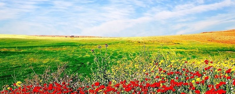 nature-flowers-sown-field-landscape-sky-background-148632